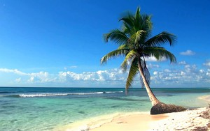Kohteen Beautiful beach with palm tree kuvake
