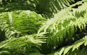 Значок для Fern in forest