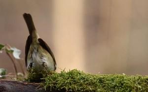 Small Bird के लिए आइकन