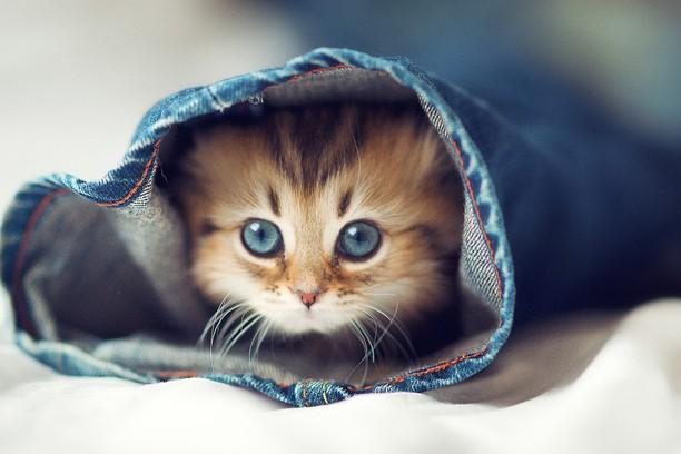 Screenshot for little cat