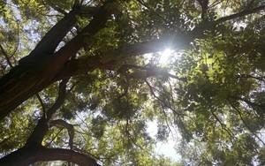 Значок для Sun and Tree