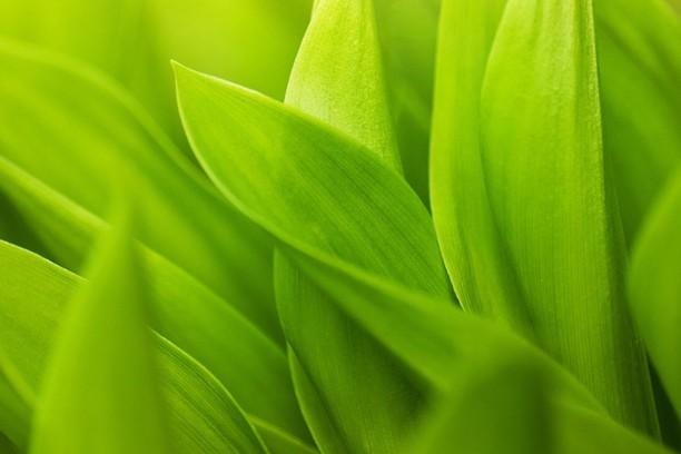 Снимок экрана для Green Grass