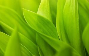 Ikona balíka Green Grass