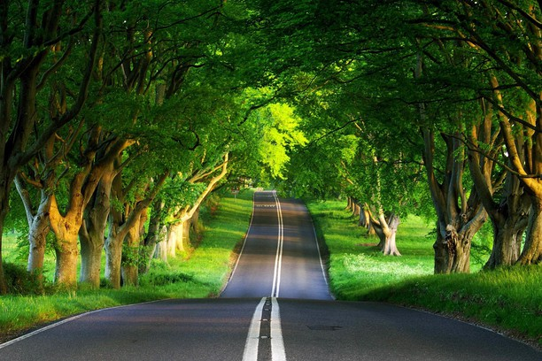 Zrzut ekranu pakietu A Canopy Trees Covering The Road