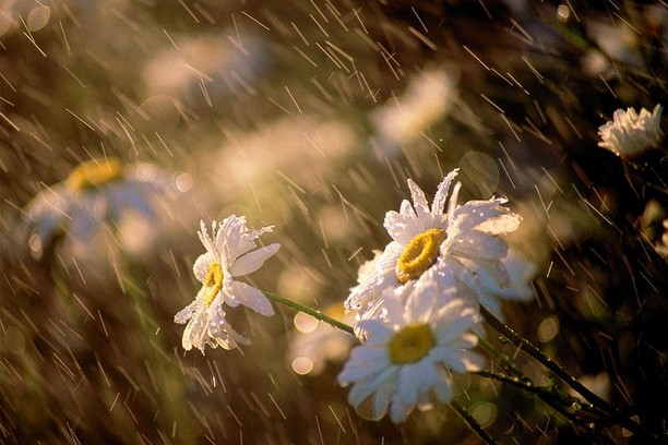 Rain flower wallpaper opera add ons about the wallpaper thecheapjerseys Gallery