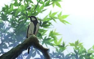Значок для 4K Tree Bird Shinkai