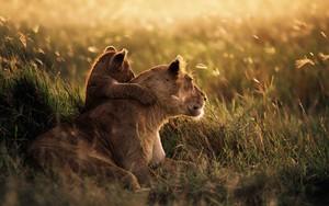 Symbol für Lions
