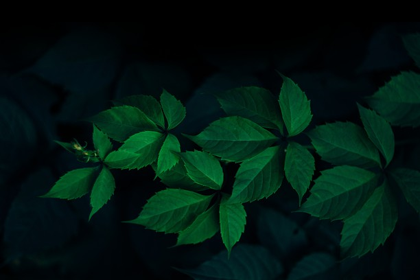 Screenshot di Green Leafs – Rodion Kutsaev