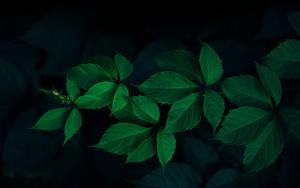 Symbol für Green Leafs – Rodion Kutsaev