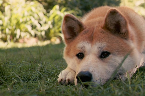 Screenshot for Hachiko