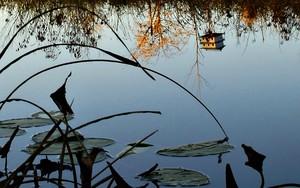 Birdhouse Reflection的图标