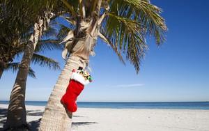 Ikona pakietu Tropical Christmas
