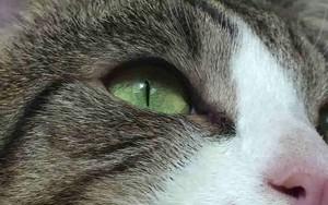Ikona pro Cat Closeup