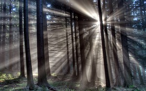 Icono de Sun Shining Through Trees