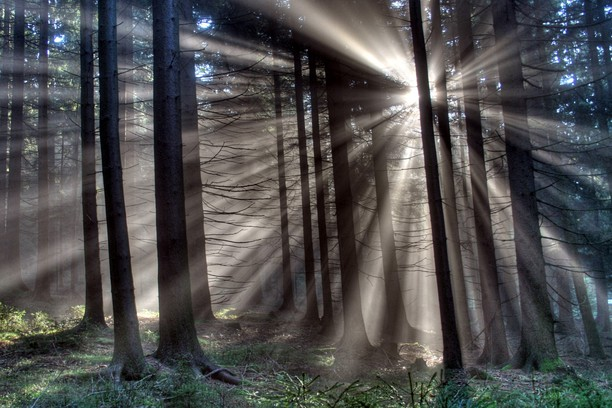 Skermprint foar Sun Shining Through Trees