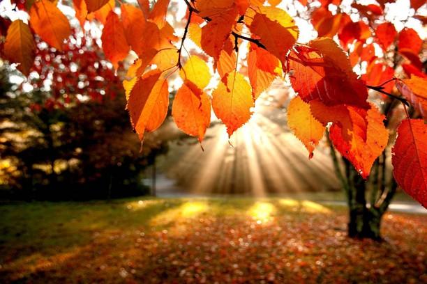 Autumn (toamna)  C2dff71127a4dcad0a86331e4a1433f1