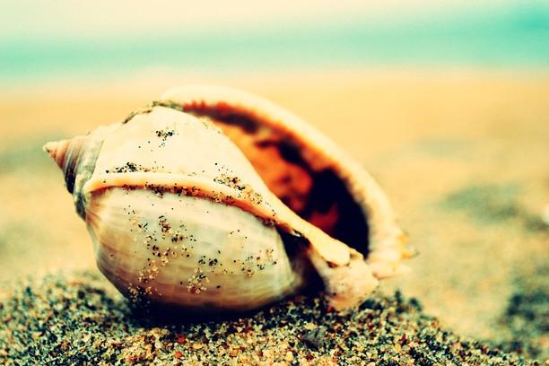Screenshot for shell shine