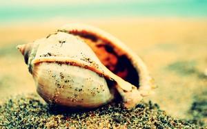 Icono de shell shine