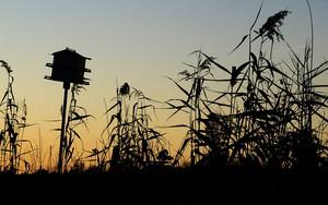 Ikoan foar Birdhouse at Seven Ponds