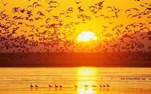 Icono de Sunset