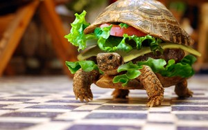 Turtle Hamburger ikonja