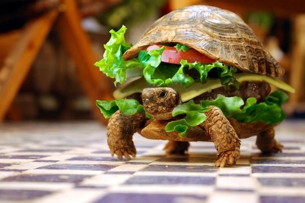 Turtle Hamburger képernyőképe