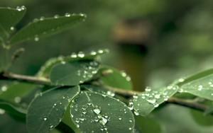 Ikona pro Sankei leaf