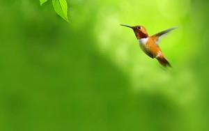 Icono de Bird 1160
