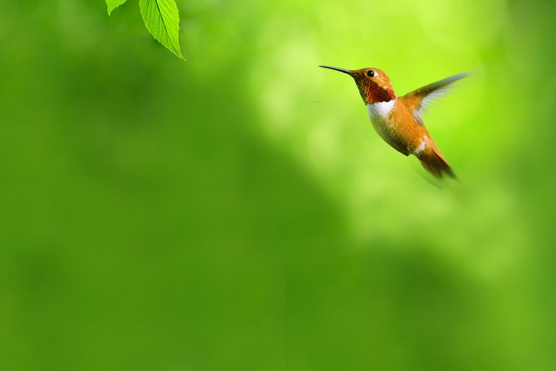 Screenshot for Bird 1160