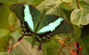 Ikona pakietu Green Butterfly