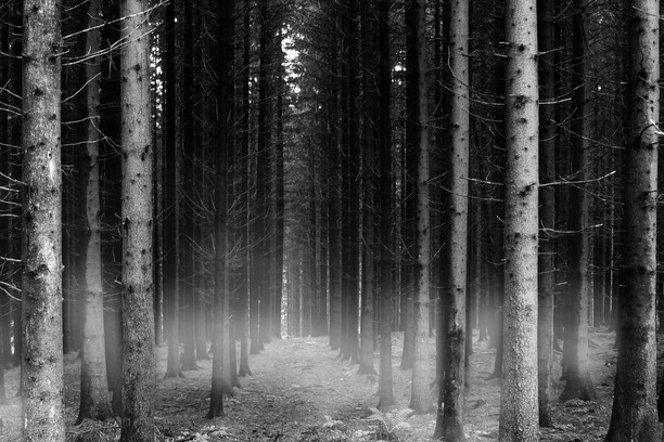 black forest wallpaper opera add ons