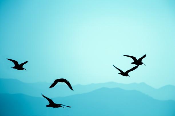 Imagem para Birds